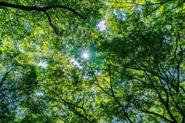 Hermoso árbol verde y hoja en el bosque con sol