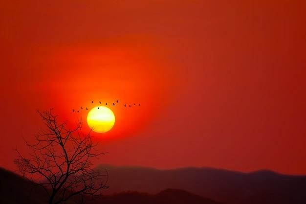 Hermoso atardecer detrás silueta pájaros volando y árboles secos en el fondo de la montaña del cielo rojo oscuro