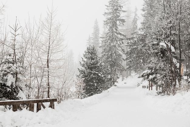 Hermoso bosque de invierno frío