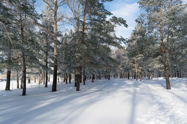 Hermoso bosque de invierno o parque en la nieve. día helado y soleado