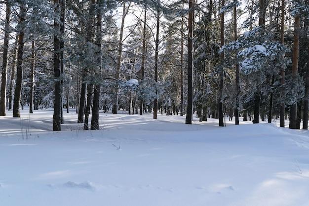 Hermoso bosque de invierno o parque en la nieve