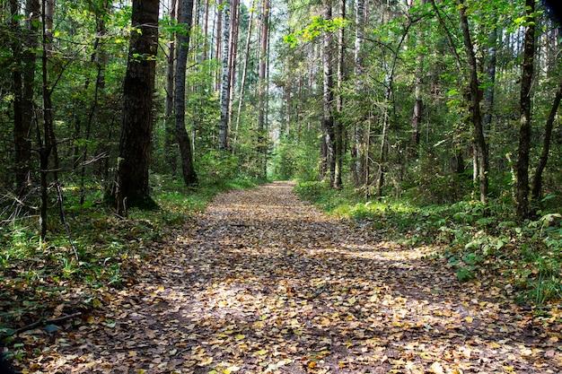 Hermoso bosque de otoño. el camino en otoño de hojas caídas. camino en el bosque