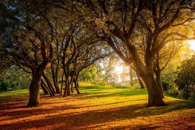 Hermoso bosque con tonos verdes y rojizos al atardecer en un día soleado