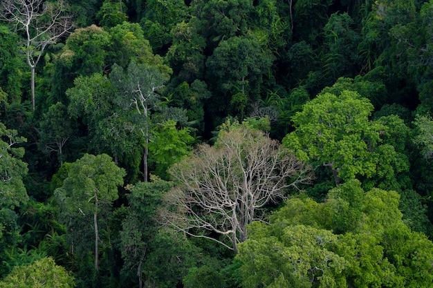 Hermoso bosque de verano con diferentes árboles