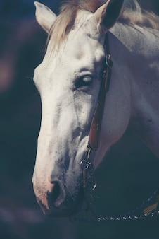 Hermoso caballo blanco con melena larga retrato