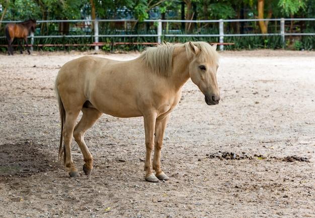 Hermoso caballo femenino