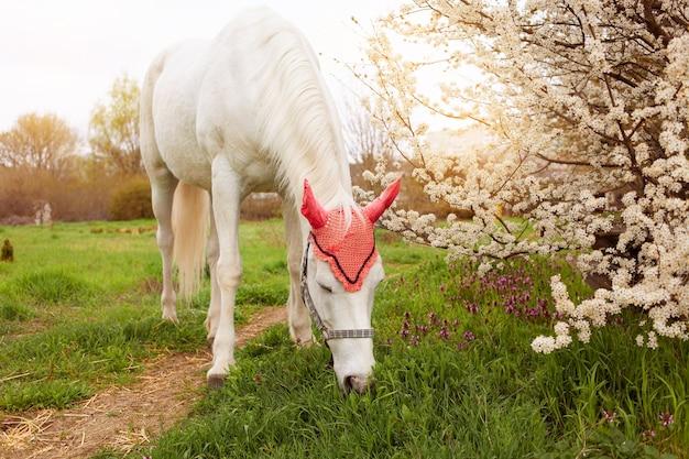 Hermoso caballo en un sombrero decorativo come hierba en un prado