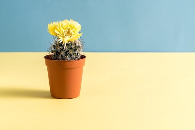 Hermoso cactus con flor amarilla