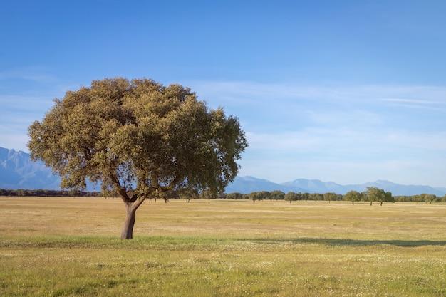 Un hermoso campo con una encina y una montaña.