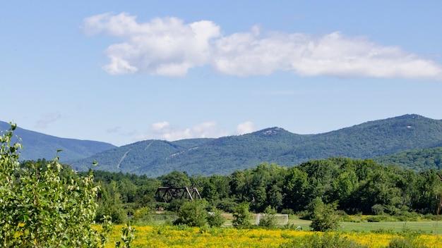 Hermoso campo de flores de canola y un puente en la distancia con montaña