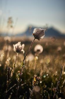 Hermoso de un campo con flores secas