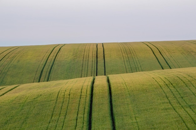 Hermoso campo con fondo de campos de trigo verde