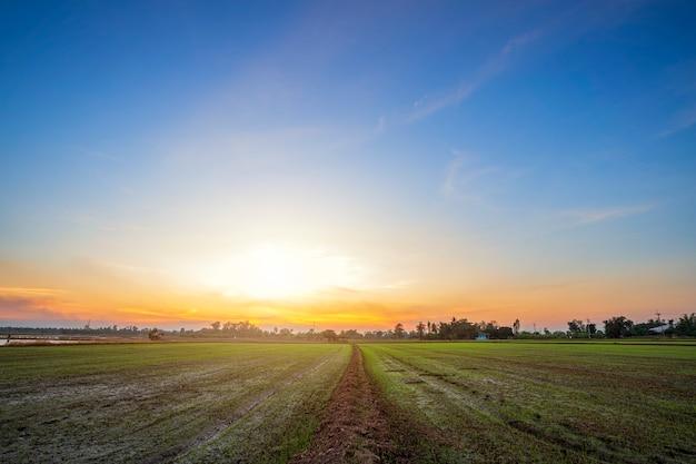 Hermoso campo de maíz verde con fondo de cielo al atardecer.