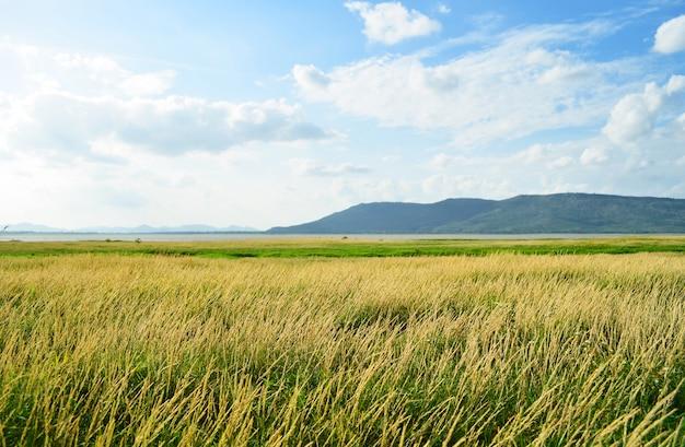 Hermoso campo rural y cielo azul.