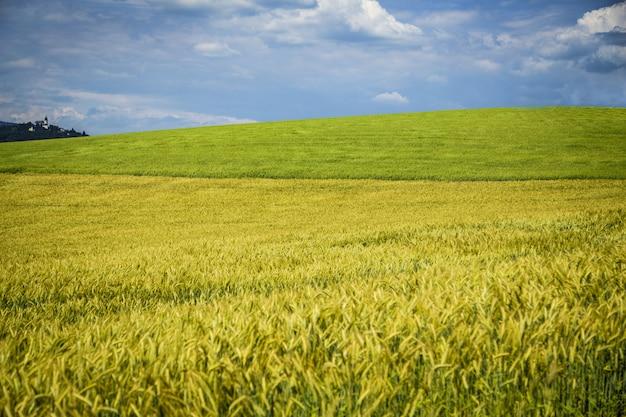 Hermoso campo de trigo con patrones y formaciones durante el verano con nubes increíbles