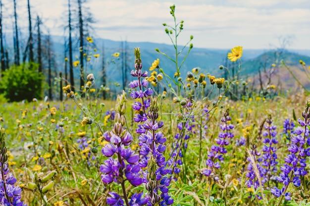 Hermoso campo verde con flores lilas y árboles altos y delgados