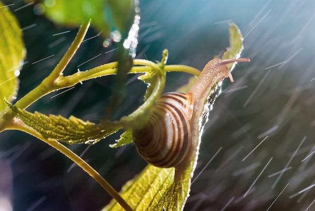 Hermoso caracol bajo la lluvia