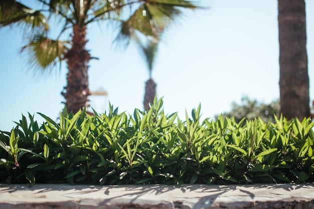 Hermoso césped en un huerto con un telón de fondo de palmeras