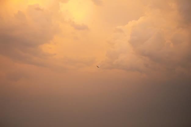 Hermoso cielo naranja atardecer con nubes, pájaro en el cielo