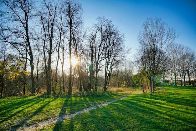 Hermoso cierre de árboles secos en un parque en un día soleado