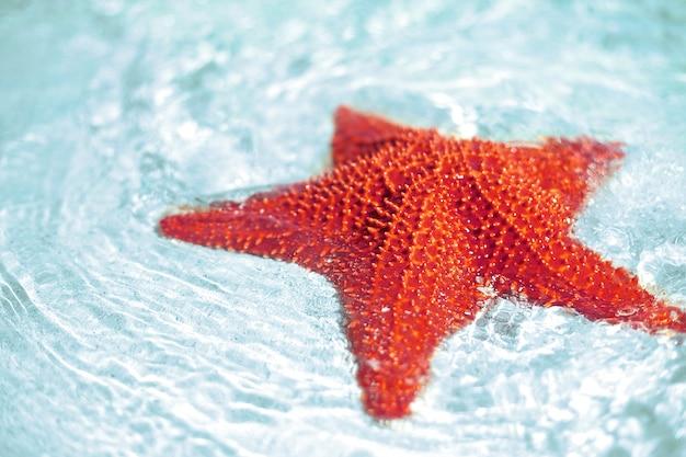 Hermoso colorido brillante estrella de mar roja en agua limpia del océano azul