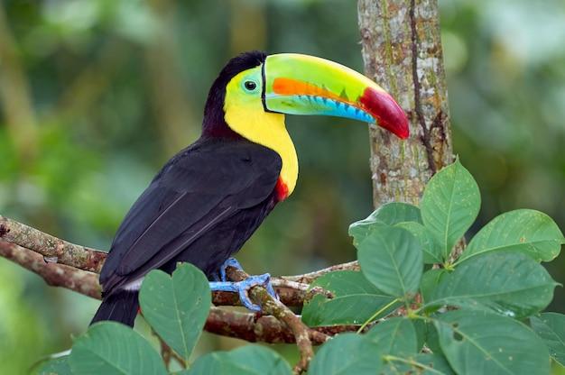 Hermoso y colorido pájaro posado en un árbol