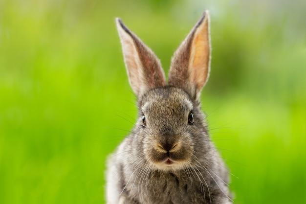 Hermoso conejo gris divertido sobre un fondo verde natural