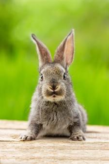Hermoso conejo gris gracioso en la naturaleza