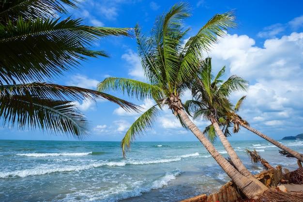 Hermoso día sobre el árbol de coco con el mar en el horizonte en la playa hat chao lao