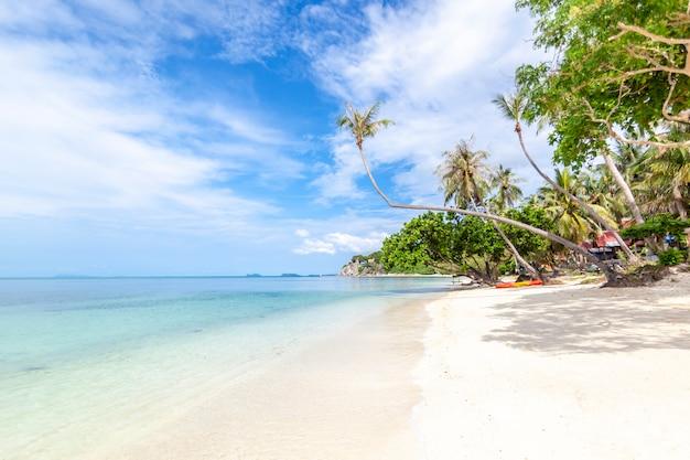Hermoso y encantador paisaje tropical extraordinario y brillante, arena blanca y palmeras
