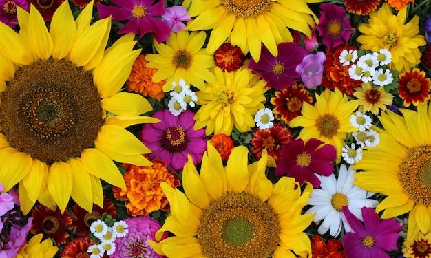 Hermoso fondo floral. flores de jardín, vista superior. girasoles y margaritas.