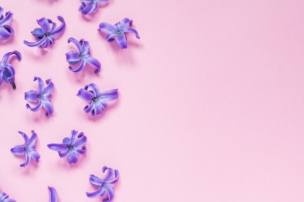 Hermoso fondo floral rosa pastel. pequeñas flores púrpuras de jacinto. lay flat, vista superior, espacio de copia