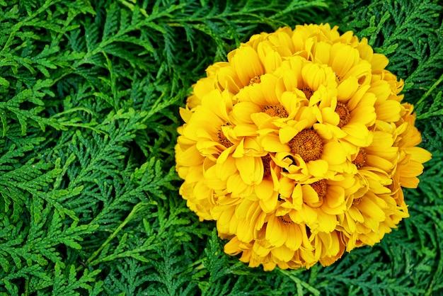 Hermoso fondo de flores amarillas y verdes. flores de aster,