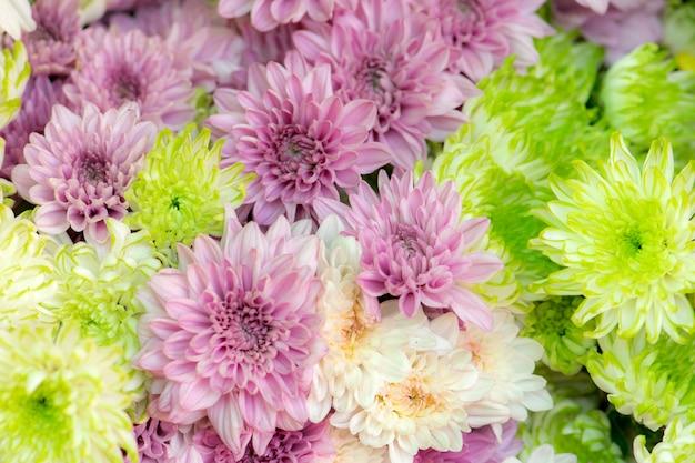 Hermoso fondo de flores de crisantemo amarillo y rosa