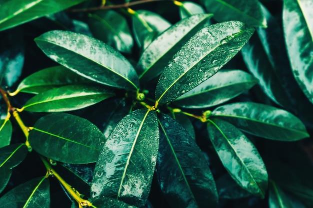Hermoso fondo natural de hojas verdes con gotas de agua.
