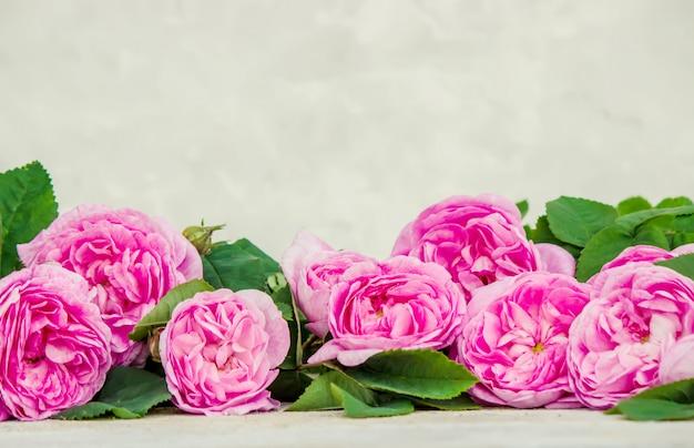 Hermoso fondo con rosas rosadas. enfoque selectivo