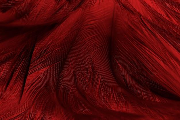 Hermoso fondo de textura de patrón de plumas rojas