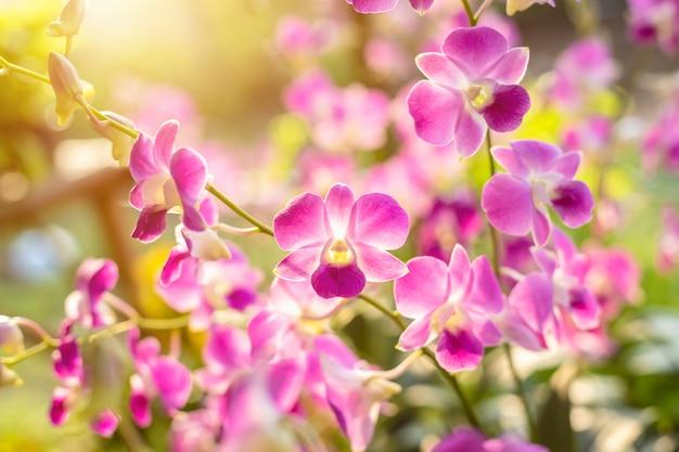 Hermoso fresco de orquídeas phalaenopsis en jardín público