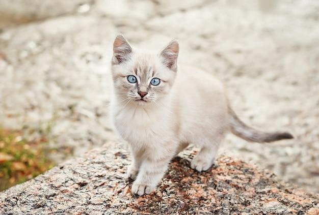 Hermoso gatito gris con ojos azules. mascota. refugio de animales. gato abandonado. gatito callejero triste en la calle después de la lluvia. concepto de protección de animales sin hogar.