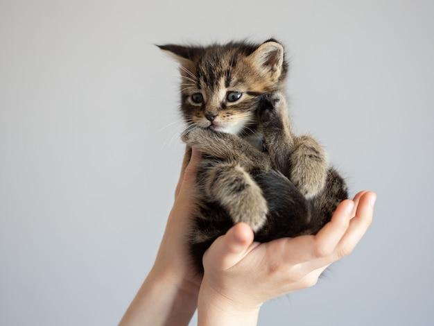 Hermoso gatito en primer plano de las manos de los niños