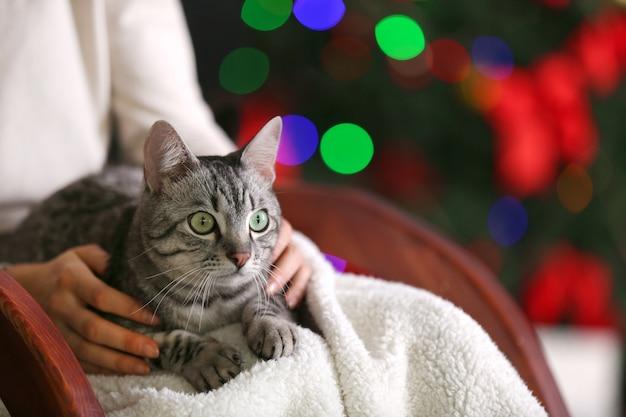 Hermoso gato en el árbol de navidad
