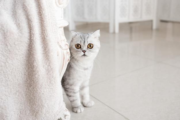 Hermoso gato atigrado gris con ojos amarillos se encuentra en el piso blanco