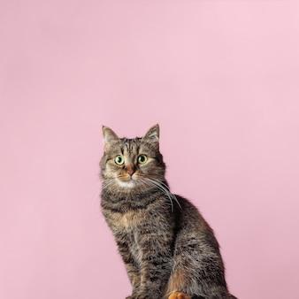 Hermoso gato atigrado con ojos verdes.