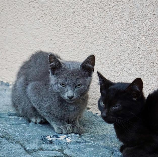 Hermoso gato callejero negro en la calle