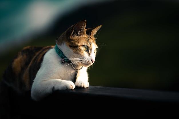 Hermoso gato doméstico acostado en una valla