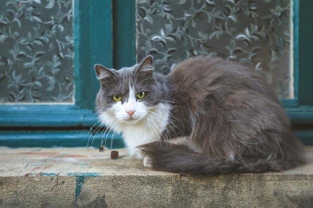 Hermoso gato gris sentado en una pequeña repisa cerca de la ventana posando