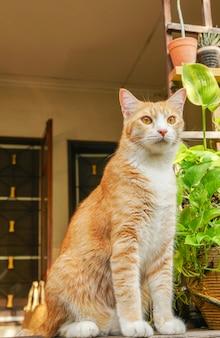 Hermoso gato en el jardín frente a la casa.