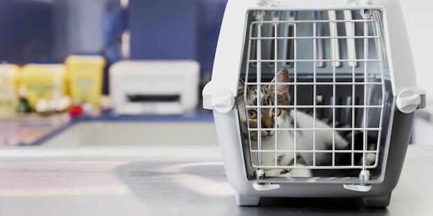 Hermoso gato en jaula en clínica veterinaria