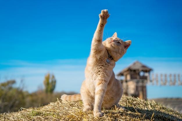Hermoso gato jengibre sentado jugando en la naturaleza