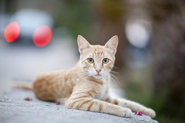 Hermoso gato jengibre Foto gratis